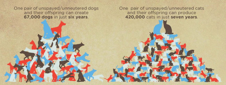 Spay Neuter Over Population Infographic