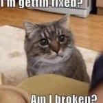 Cat Behavior Issues
