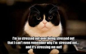 Dealing with Cat Stress