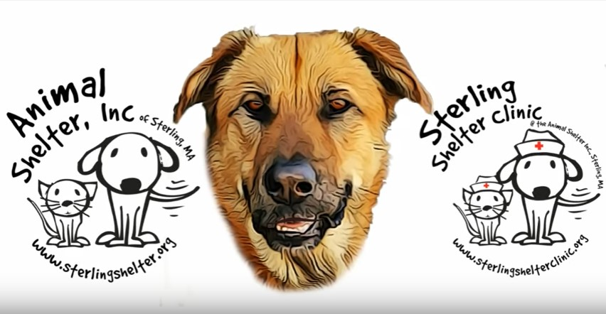 Animal Shelter Low Cost Spay and Neuter Clinic Video