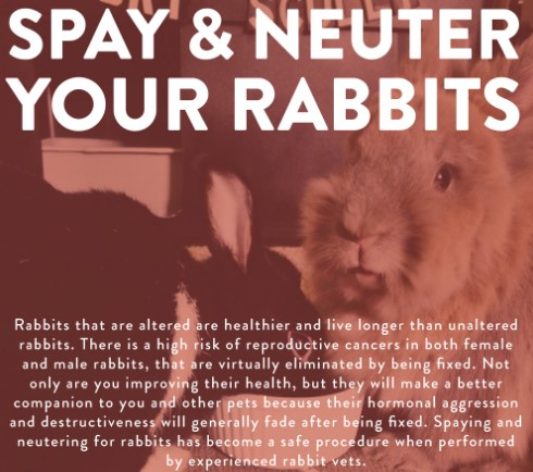 rabbit spay and neuter
