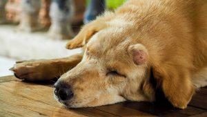 dog-skin-tumor